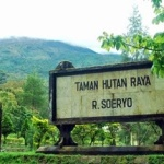 Hutan Lindung di Kaki Gunung Anjasmoro