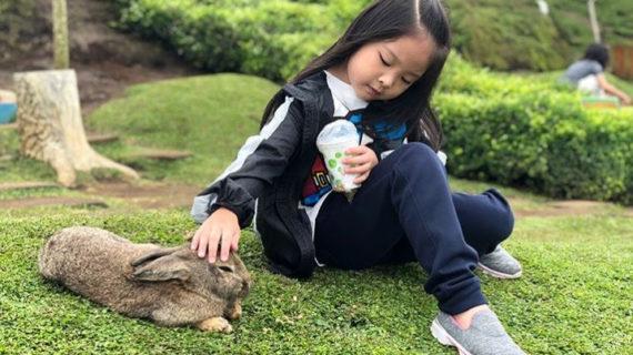 Obyek wisata taman kelinci yang begitu menarik untuk anak-anak