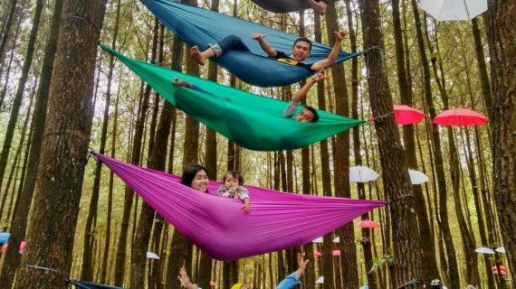 Wisata Hutan Pinus semeru yang menjadi tujuan menarik wisatawan